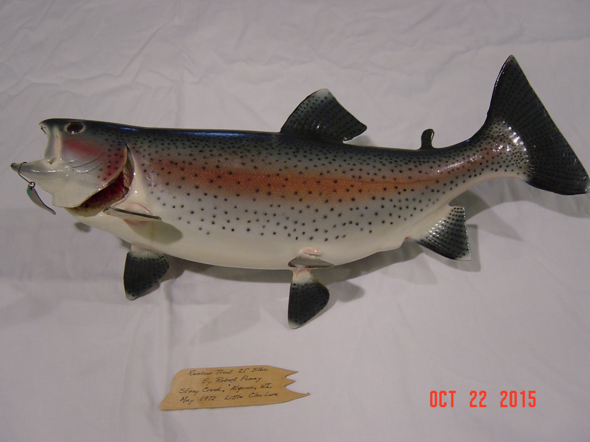 Fish mounts for sale for sale forum taxidermy talk for Fish mounts for sale