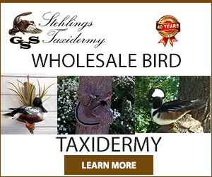 300x250-wholesale-bird-taxidermy