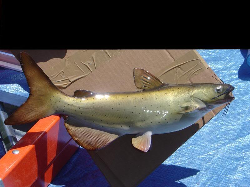 fishandpaintroompics001-1