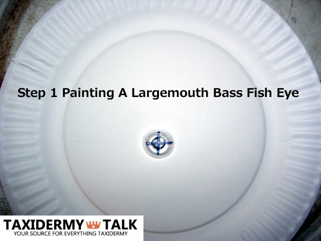 Step 1 Painting a Largemouth Bass Fish Eye