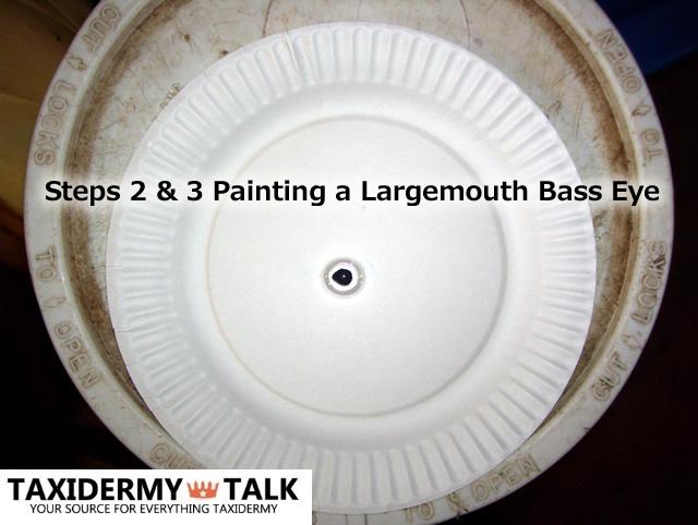 Step 2&3 Painting a Largemouth Bass Fish Eye