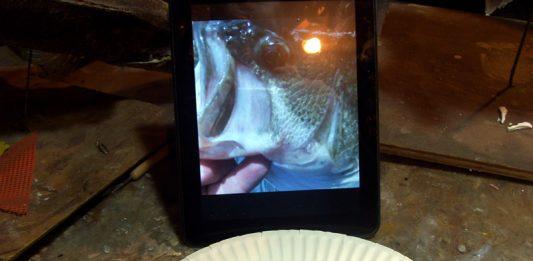 Painting a Largemouth Bass Fish Eye