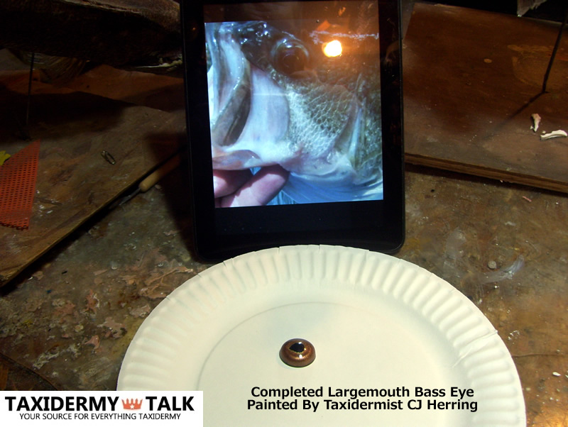 Painting a largemouth bass fish eye taxidermy talk for Fish eyes in paint