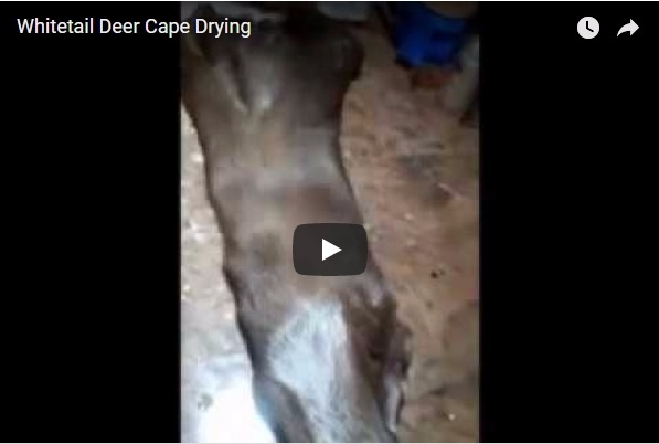 Deer Cape Drying 101